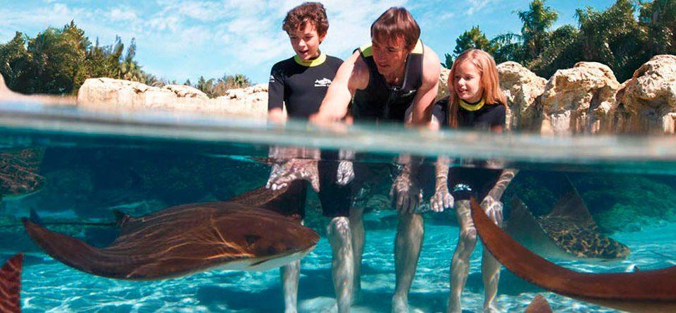 Discovery Cove – инновационный водный развлекательный парк в Орландо